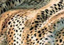 ff_cheetahdetail