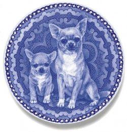 Chihuahua - Smooth Coat