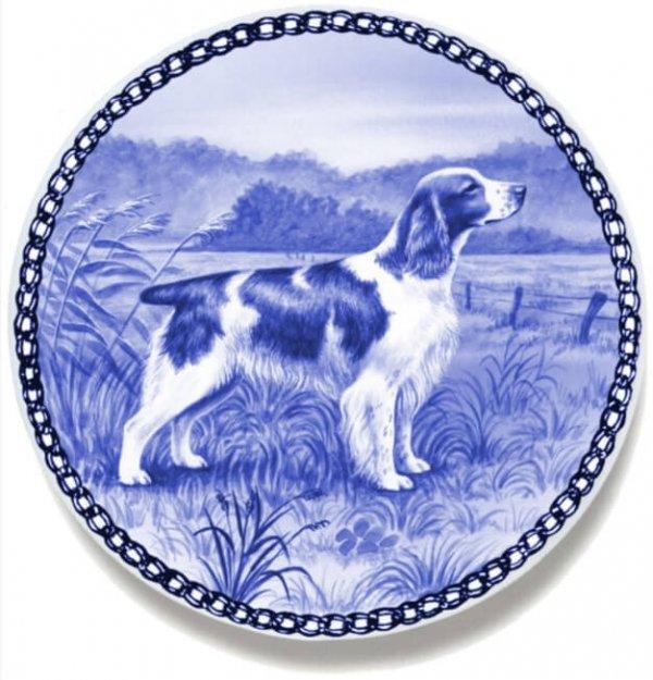 Springer Spaniel - Welsh