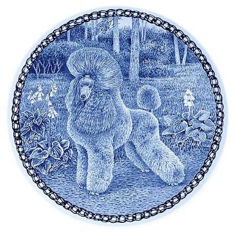 Poodle - Miniature