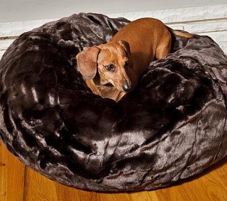 black-forest-ball-w-dog-446x600